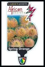 rsz_spring_orange