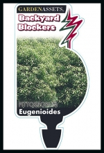 rsz_eugenoides