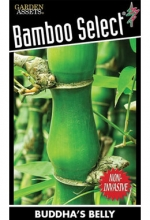 BAMBOO-BUDDAHS-BELLY