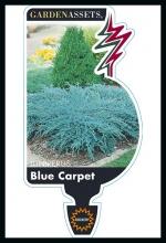 rsz_blue_carpet