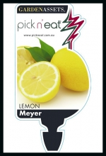 lemon_meyer