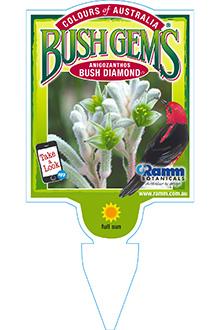ANIGOZANTHOS-BUSH-DIAMOND
