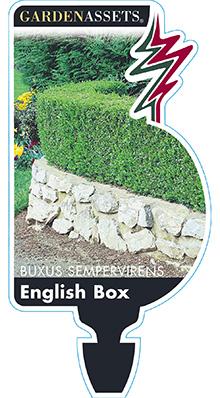 BUXUS-ENGLISH-BOX