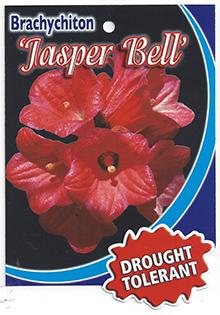 Brachychiton-Jasper-Bell