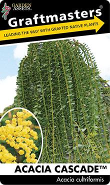 Acacia Cascade