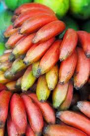 Banana Dwarf Red Dacca