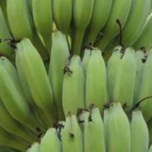 Banana Rajapuri